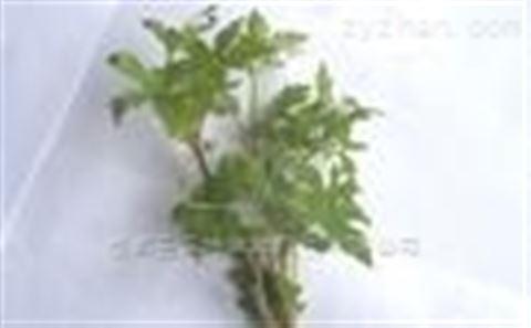 柴胡皂苷B4型号58558-09-1产品功能特点