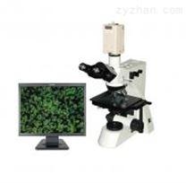 CMY-400Z摄像型透反射金相显微镜