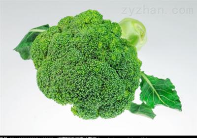 萝卜硫素西兰花提取物 10:1 比例提取