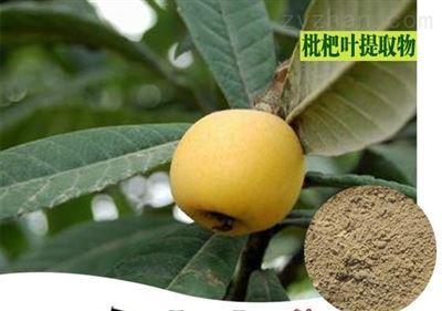 枇杷叶提取物 10:1 比例提取  生粉